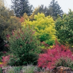 wild-garden-inspiration-flowers3.jpg