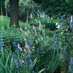 wild-garden-inspiration-flowers4.jpg