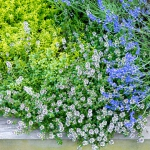 wild-garden-inspiration-flowers5.jpg