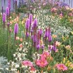 wild-garden-inspiration-flowers8.jpg