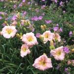 wild-garden-inspiration-flowers9.jpg