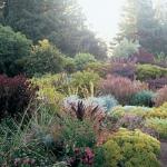 wild-garden-inspiration-herbs4.jpg