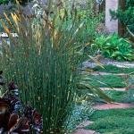 wild-garden-inspiration-herbs5.jpg