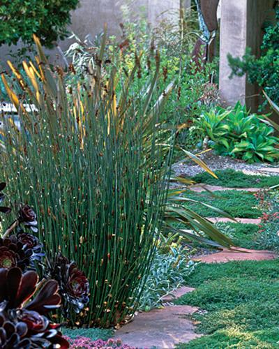 Wild Backyard Herbs : wildgardeninspirationherbs5jpg