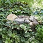 wild-garden-inspiration-naturalness5.jpg