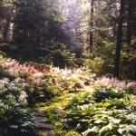 wild-garden-inspiration-naturalness7.jpg