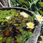 wild-garden-inspiration-pond3.jpg