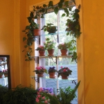 window-shelves-ideas-for-plants4-1.jpg