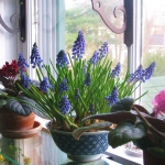 window-shelves-ideas-for-plants4-6.jpg