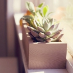 windowsill-decorating-ideas-plants8.jpg