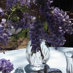 wisteria-branches-table-setting-breakfast3-7.jpg