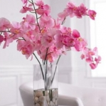 wonderful-orchids-ideas2-14.jpg
