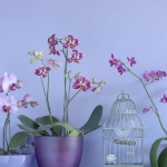 wonderful-orchids-ideas3-5.jpg
