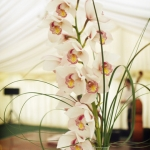 wonderful-orchids-ideas3-13.jpg