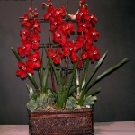 wonderful-orchids-ideas3-17.jpg